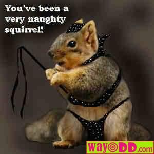 funny-pictures-a-very-naughty-squirrel-1xq.jpg